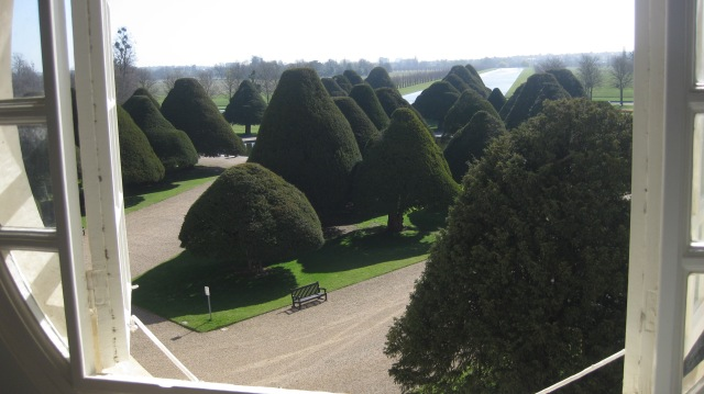 My favourite yew trees.